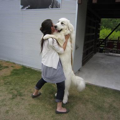21白犬とダンス