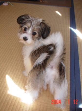 子犬のリプ