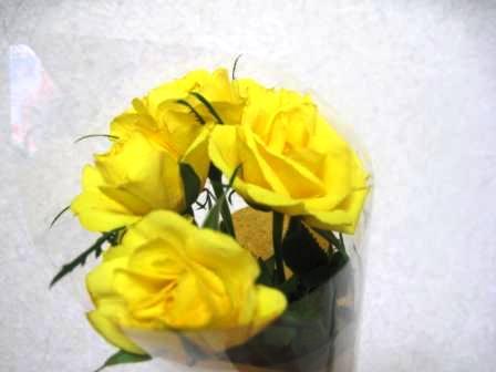 230329お花