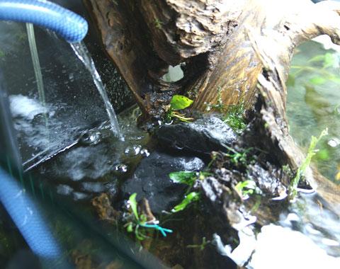 今日の水槽4