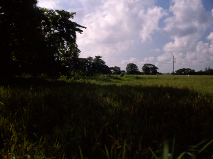 calapan-rice-field4