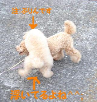DSC07337(1)1.jpg