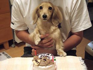 シイとケーキ