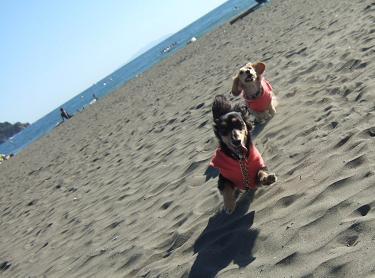 砂浜ってサイコー!!