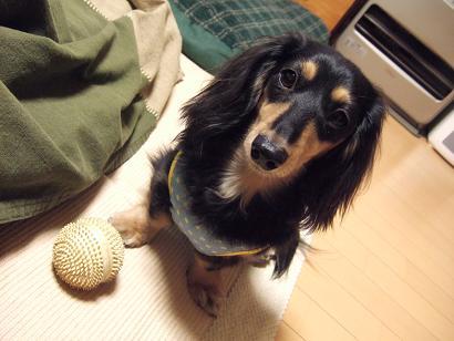 遊んでくだたい。