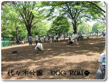 DOG RUN