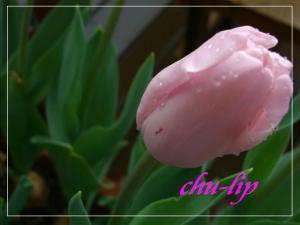 CIMG0705.jpg