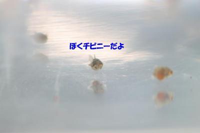 20070830223002.jpg