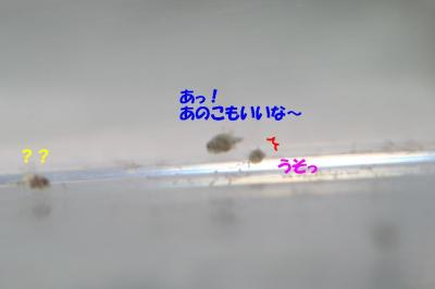 20070830223311.jpg