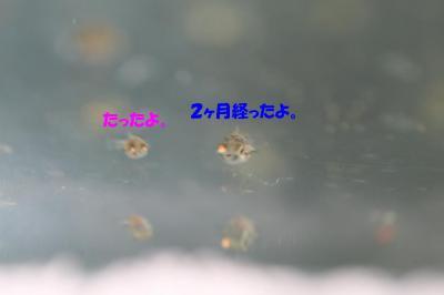 20070912002813.jpg