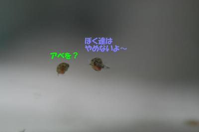 20070913012611.jpg