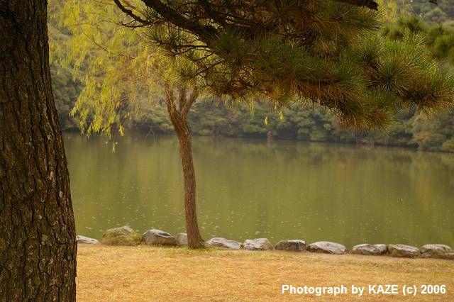 雨の桜が池