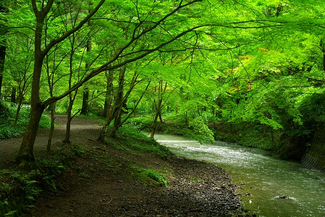 風に吹かれて 森と小川の中で