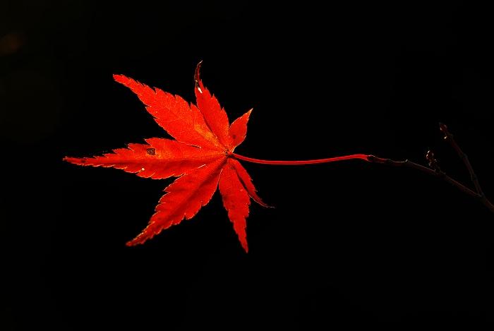 秋ひとつ…