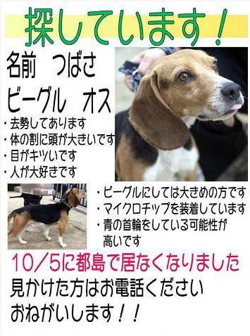 tubasa_gif.jpg