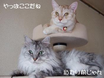2007_09010104.jpg