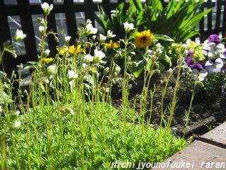 小花は背高のっぽ