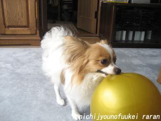 メイのボール遊び2