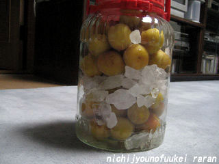 梅シロップ5本目