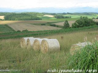 牧草のコロン