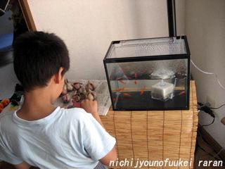 金魚は全部で8匹