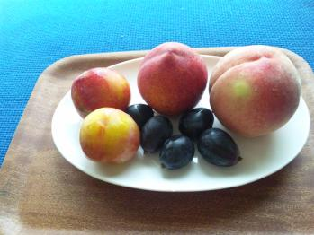 0808果物
