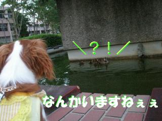 20070529161209.jpg