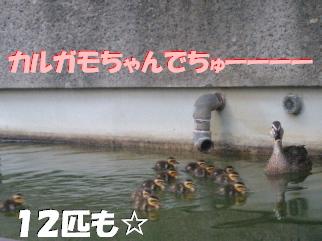 20070529161554.jpg
