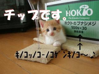 20070530125437.jpg