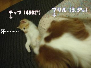 20070530125534.jpg