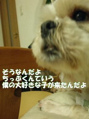 20070530125604.jpg
