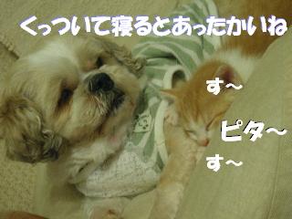 20070530125645.jpg