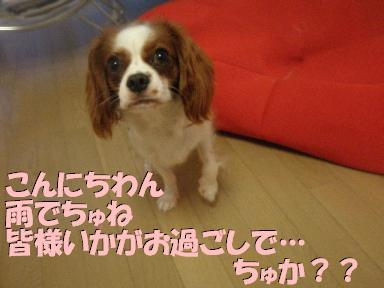 20070714185634.jpg