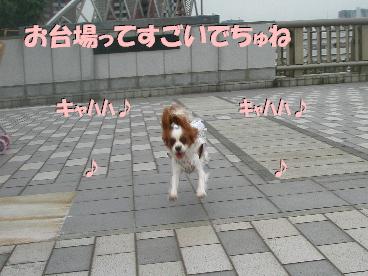 20070718115450.jpg