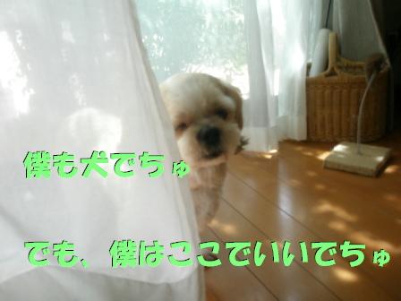 20070813180953.jpg