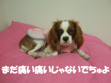 20071009181637.jpg