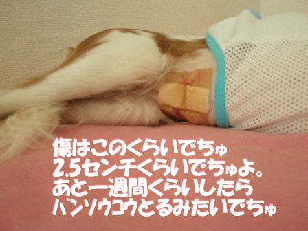 20071010181130.jpg