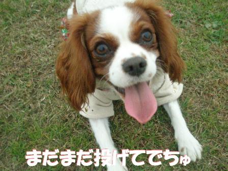 20071209194648.jpg