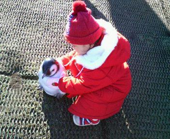 ペンギンさんの子供
