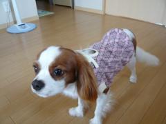 ピンクの冬服