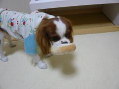 リンママのおもちゃで遊ぶ
