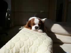 ソファーのヘリで寝る