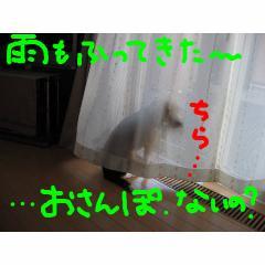 ame_20070906091847.jpg