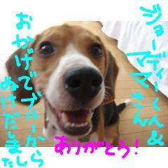 arigatou_20070910114448.jpg