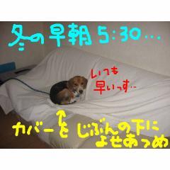 asa_20071209142431.jpg