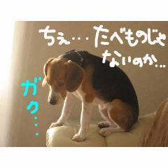 gaku_20071212114301.jpg