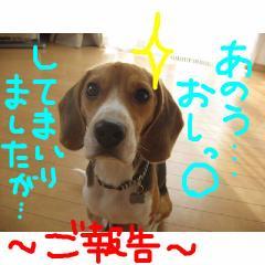 gohoukoku.jpg