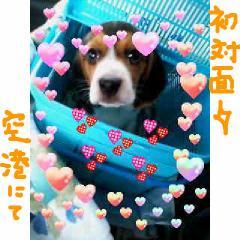 hato_20070912092821.jpg