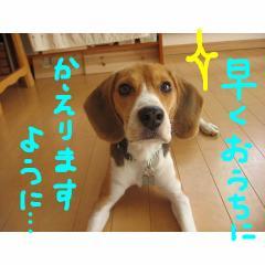 hayaku_20071216133411.jpg