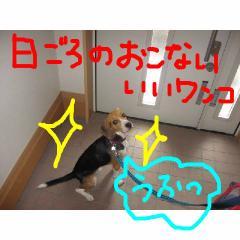 higoro.jpg